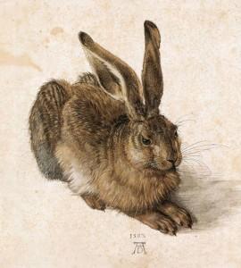Dürer Young Hare