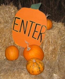 halloween pumpkin orange hay